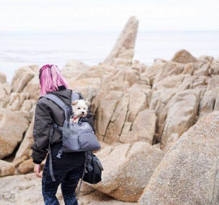 Best Dog Backpacks 2019 - Post Thumbnail