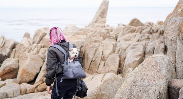 Best Dog Backpacks 2019 - Post Thumbnail